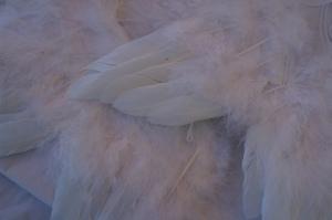Angel wings picked up in London from Harrods.